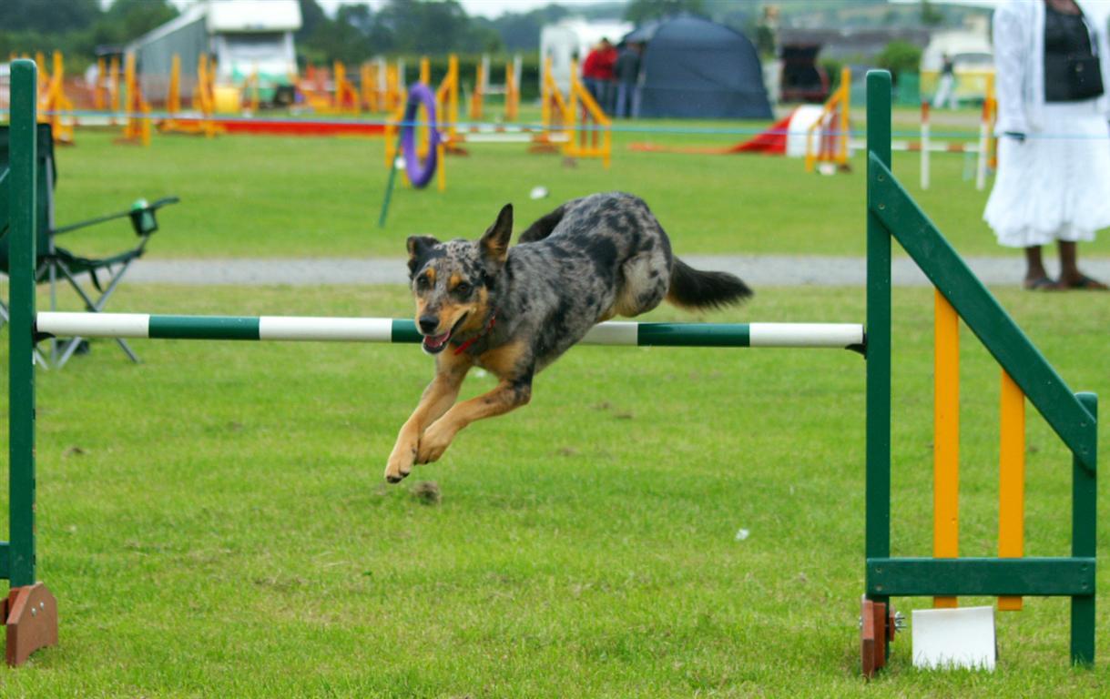 Valley Dog Training